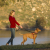 Halti Training Dog Lead