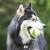 KONG Air Squeaker Tennis Ball Dog Toy