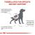 Royal Canin Veterinary Diets Renal Dry Adult Dog Food