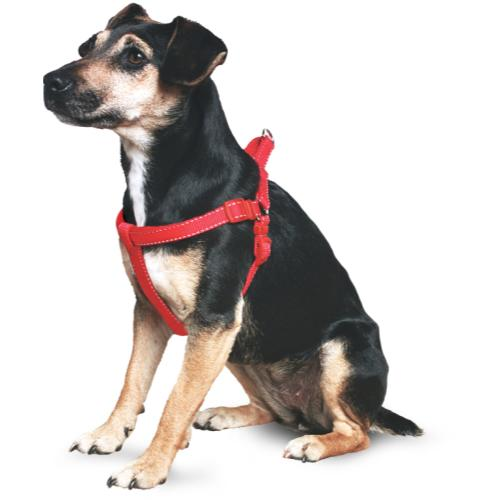 Ancol Nylon Padded Dog Harness Red