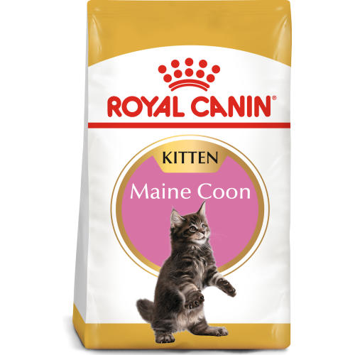 Royal Canin Maine Coon Kitten Dry Cat Food