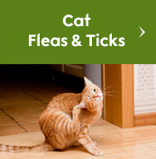 Cat Fleas & Ticks
