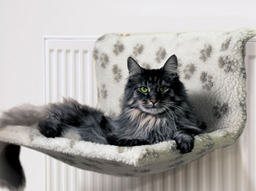 Save up to 50% on Radiator Cat Beds