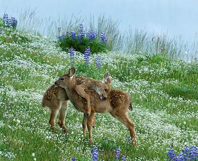Super-cute deer