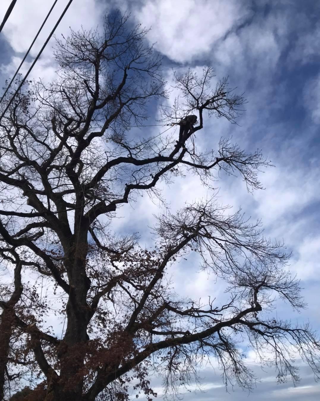 élagage d'un arbre - Horizon Arboré à Pons