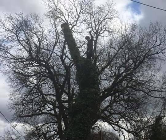 Abattage par démontage d'un chêne - Horizon Arboré à Pons