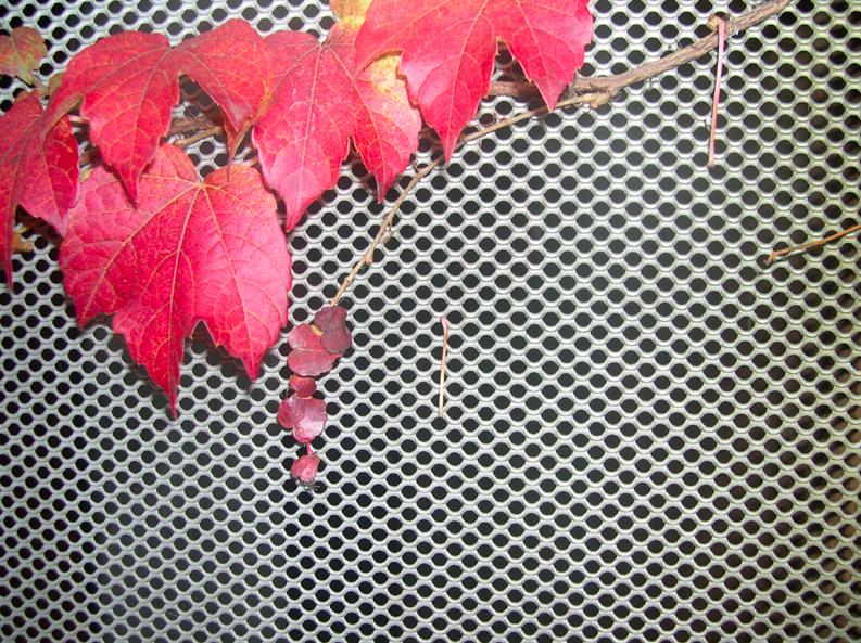 Maille Chelsea pour jardin vertical