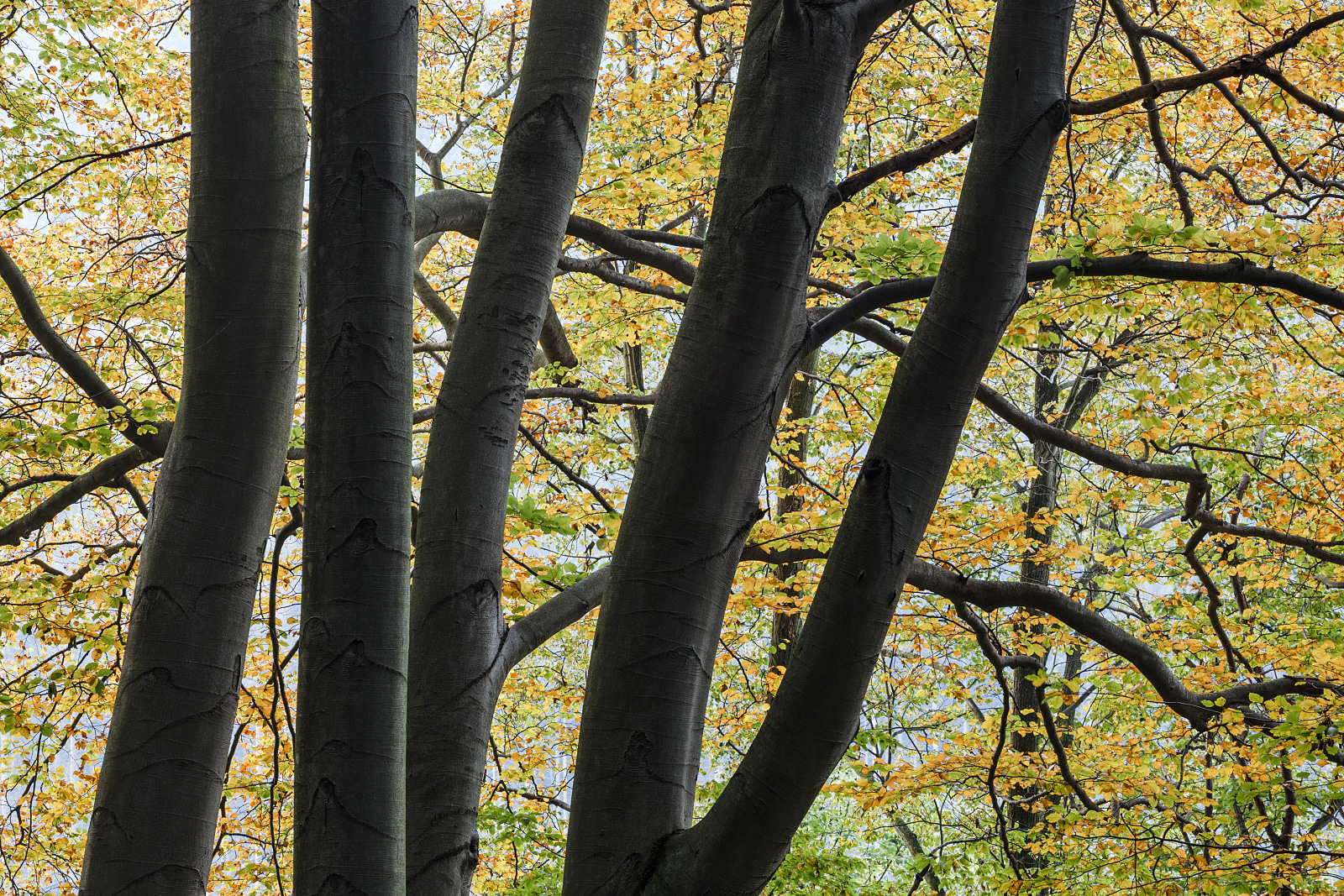 Four trees with autumn leaves