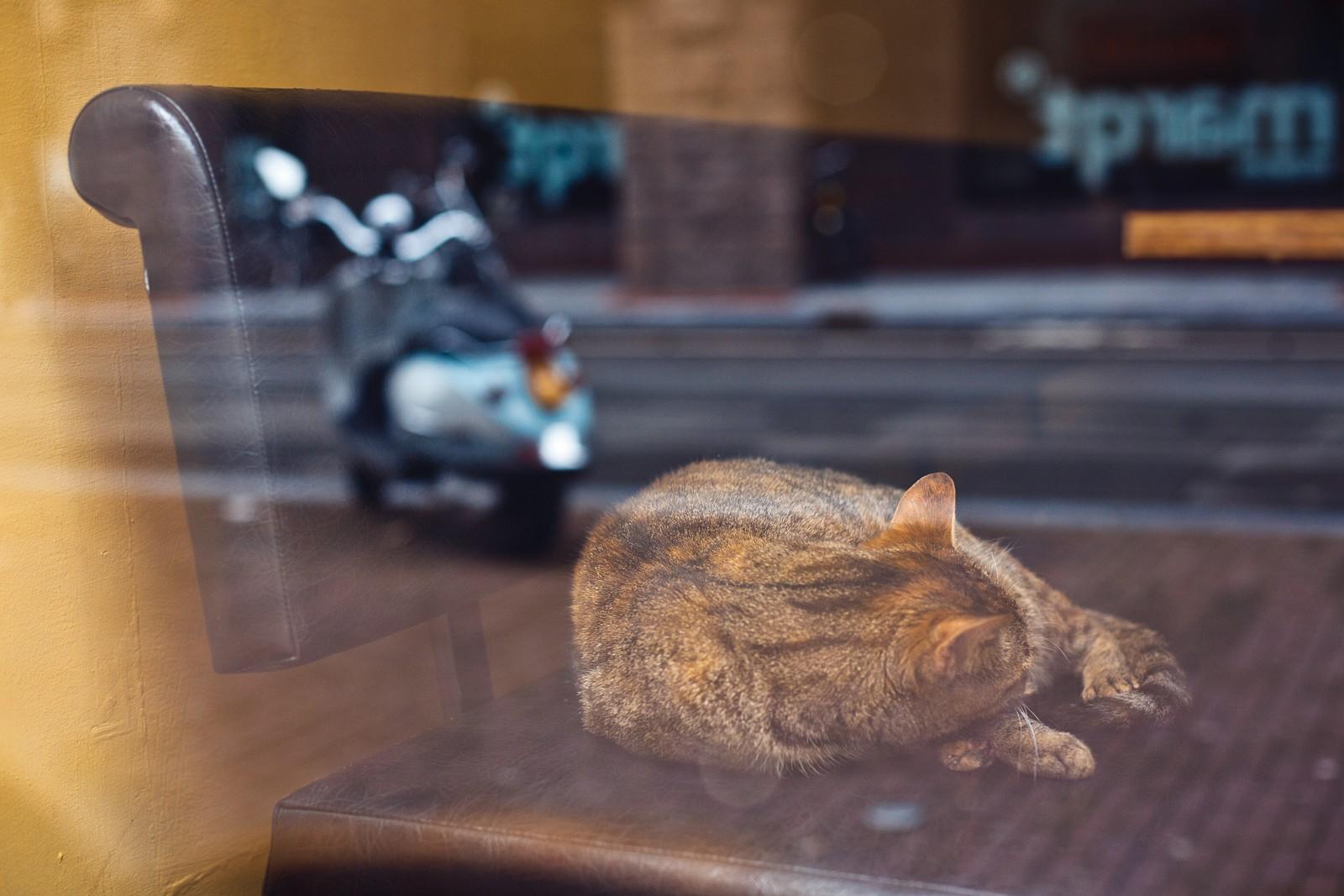 Cat in a cafe