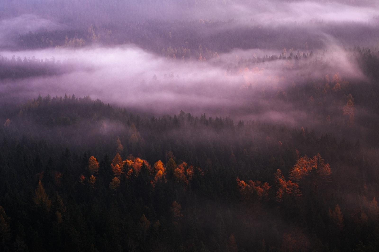 Autumn trees in dawn fog