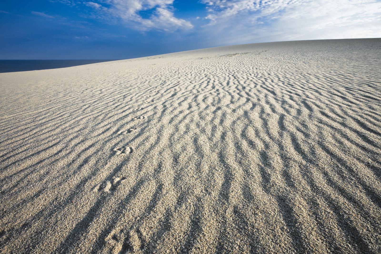 Birds footprints on a dune