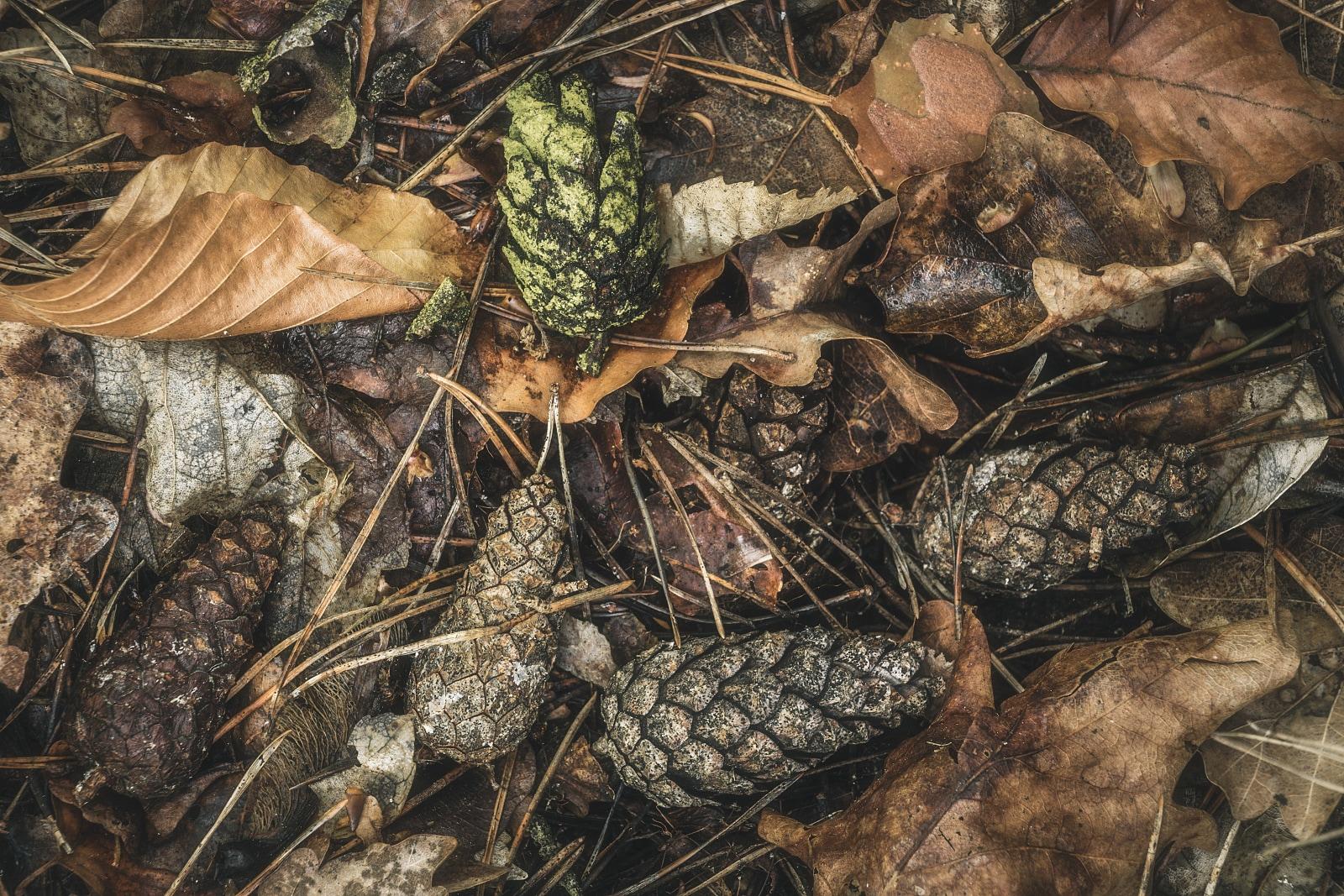 Cones on the ground