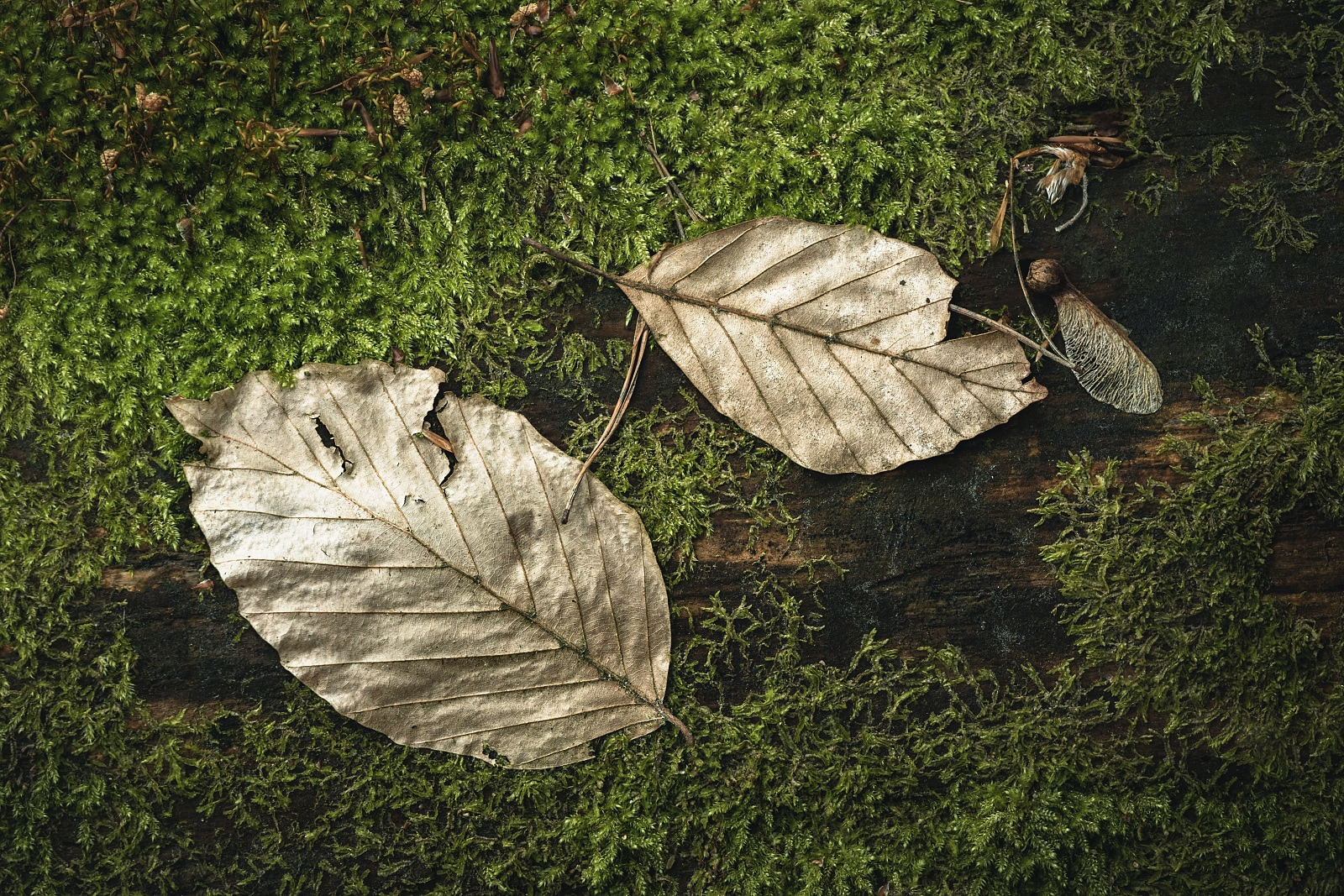 Leaves on a mossy fallen tree
