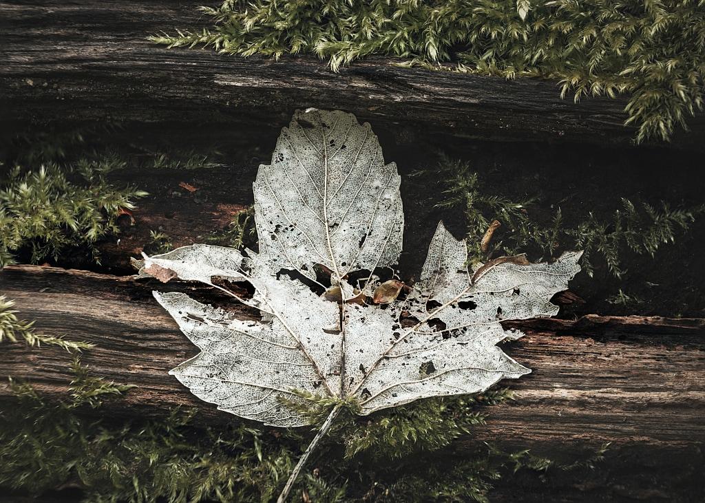 Leaf on a fallen tree
