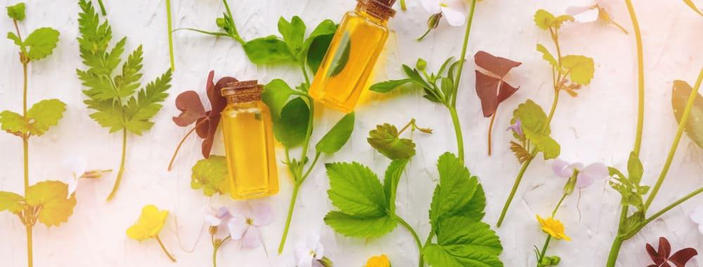 10 Ayurvedic Herbs for Hair Growth