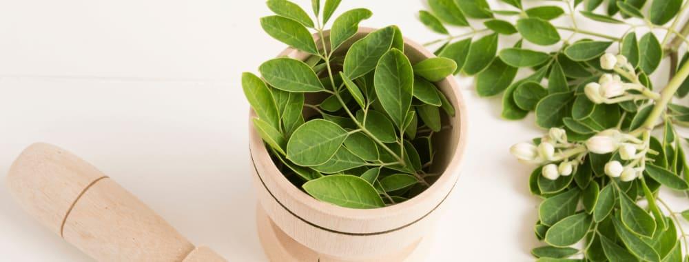 Moringa Leaf Benefits for Women  | Moringa Leaves for Weight Loss