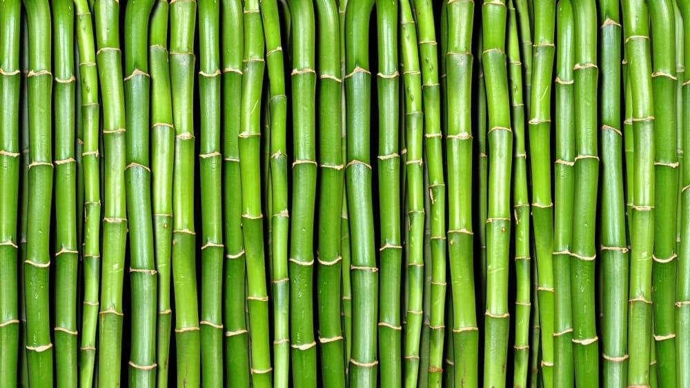Health Benefits of Bamboo Shoots