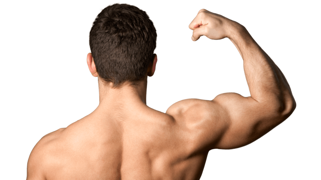 Gokshura plays a key role in bodybuilding
