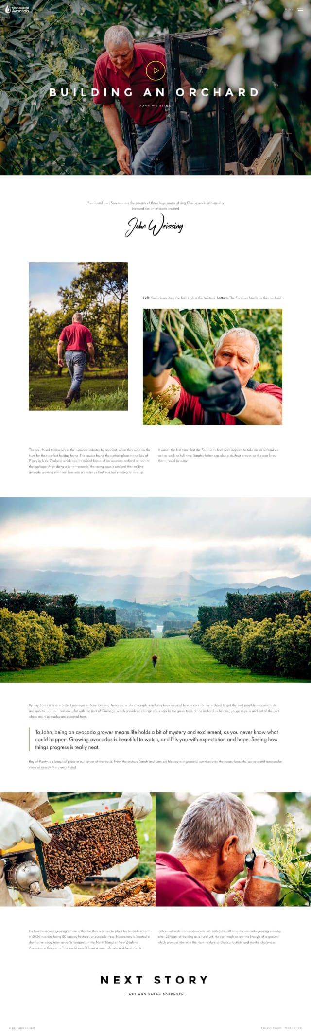 NZ Avocado Story