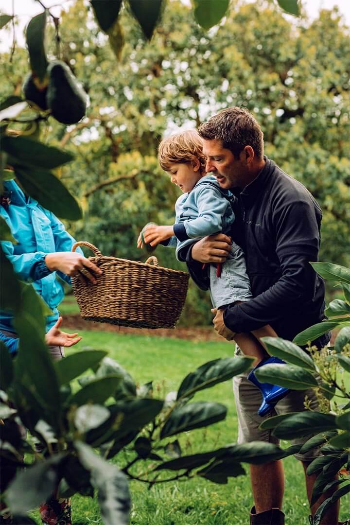 NZ Avocado