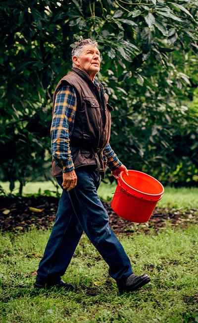 NZ Avocado - Robert Jefferies