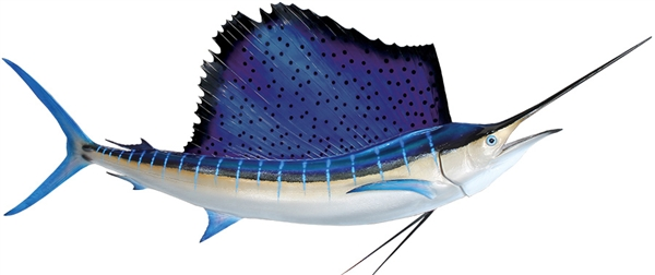 Sailfish Species Florida