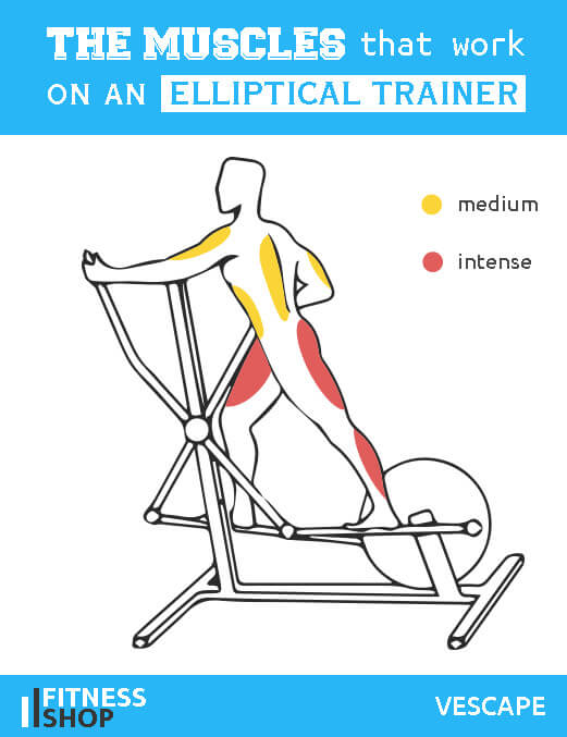Elliptical cross trainer which muscles work