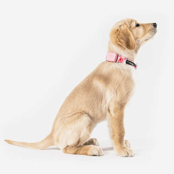 Whistle Go Pet Tracker