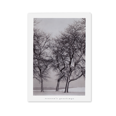 Picture of Snow Blown Trees Greeting Card
