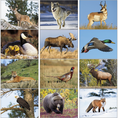 North American Wildlife Wall Calendar Mines Press