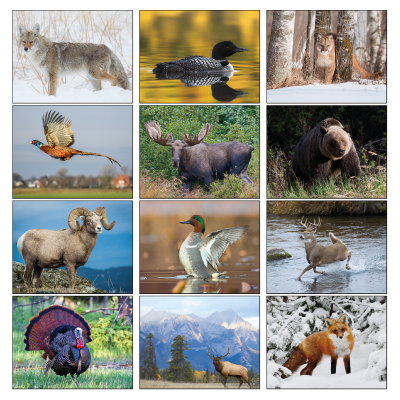 Picture of North American Wildlife Wall Calendar