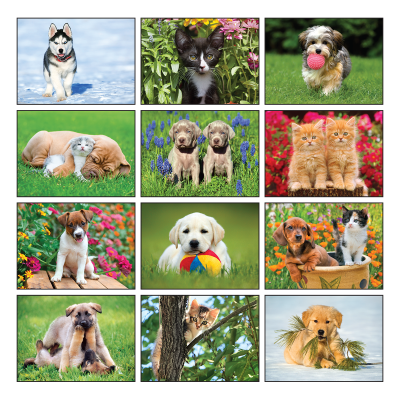 Picture of Four Paws Wall Calendar