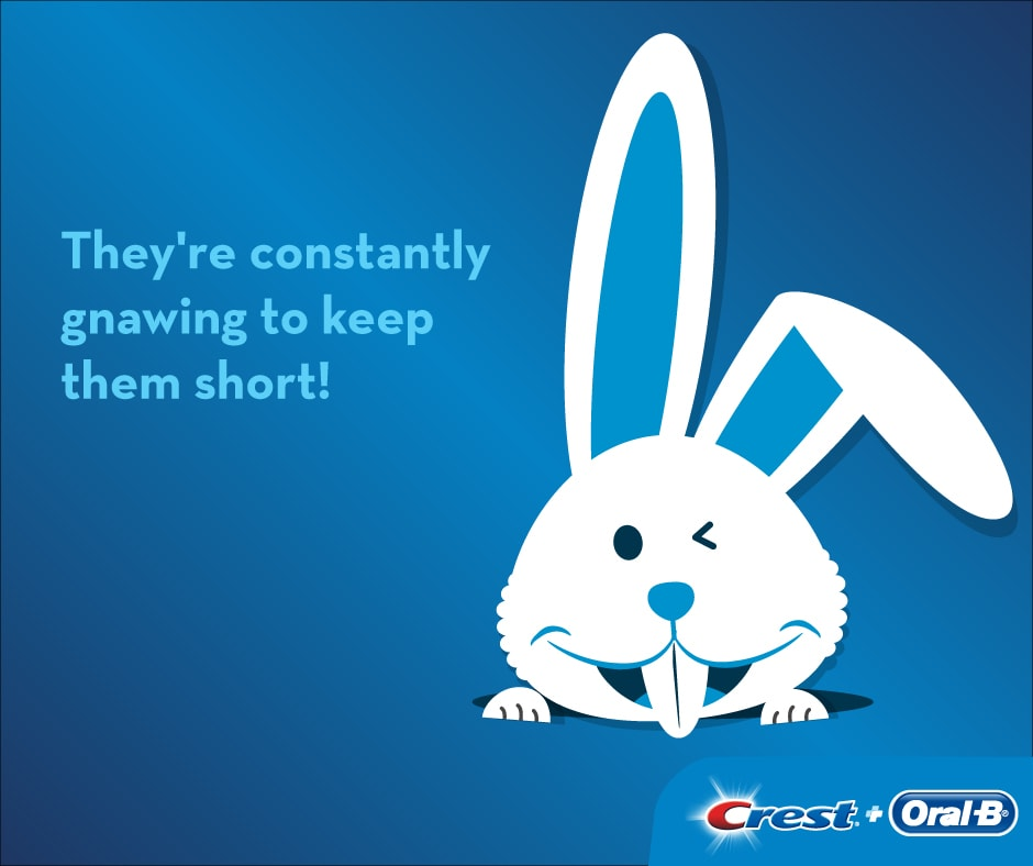 Did you know that rabbit teeth never stop growing?
