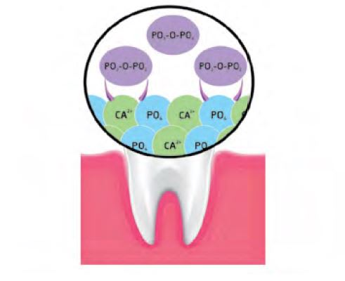 Binding of pyrophosphates to calcium hydroxyapatite at the tooth surface