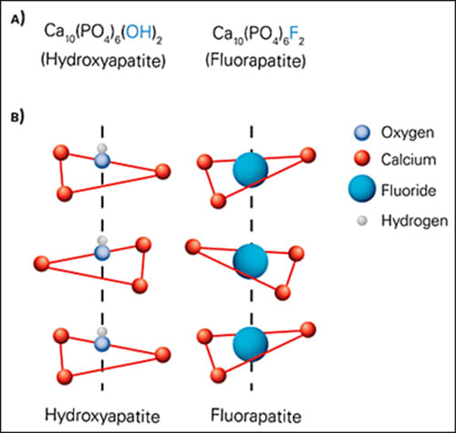 Image: (A) Fluoride ions (F–) replace hydroxyl ions (OH–) in hydroxyapatite to form fluorapatite in the tooth enamel. (B) A portion of the apatite crystal lattice is depicted showing the replacement of hydroxide for fluoride.
