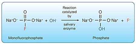 Enzymatic activation of SMFP.