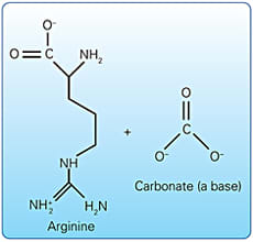 Image: Pro-Argin™: Arginine is a naturally occurring amino acid, and calcium carbonate creates a basic (high pH) environment.