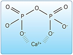 Negatively charged pyrophosphate molecules bind (chelate) positively charged calcium ions.