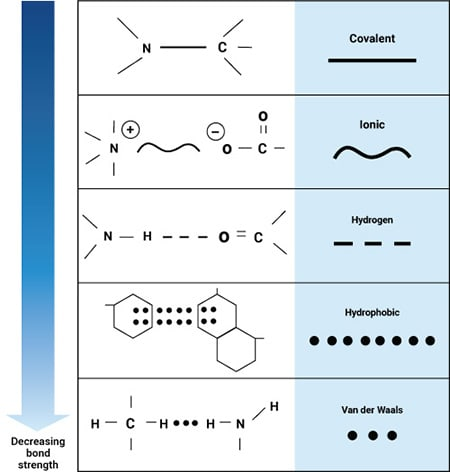 Hydrogen and ionic bonds