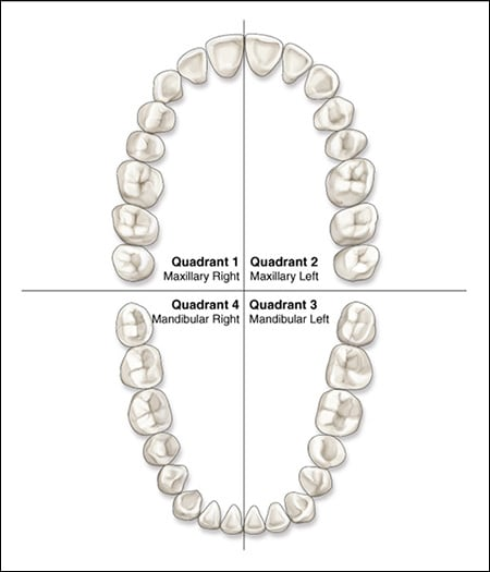 dental quadrants