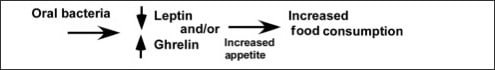 Diagram showing oral bacteria increase appetite