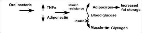 Diagram showing oral bacteria redirect energy metabolism