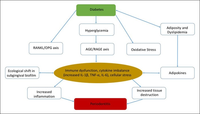 Chart showing proposed mechanism of interaction between diabetes mellitus and periodontitis