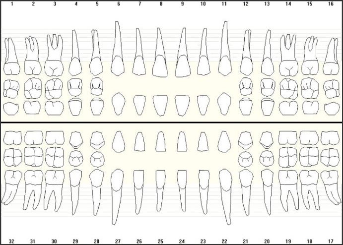 Image of universal numbering system for adult teeth.