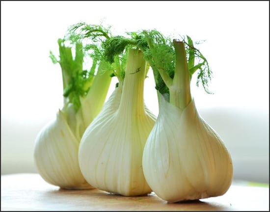 Photograph showing fennel