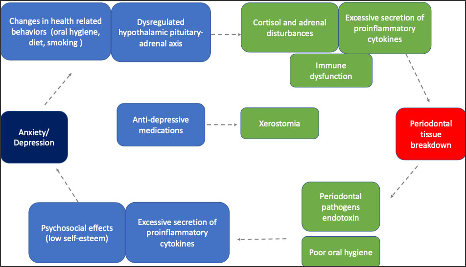 Model of the Effects of Anxiety/Depression on the Immune System / Oral Health