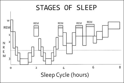 Chart depicts sleep staging