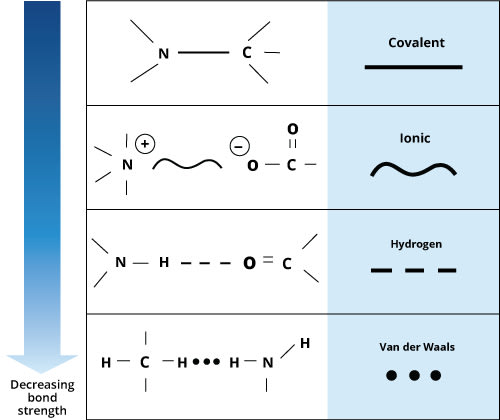 Chart showing hydrogen bonding and ionic bonding are the most common in drug-receptor interactions