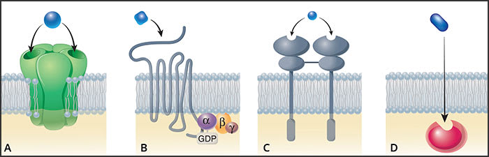 Illustrations showing the major types of drug-receptor interactions