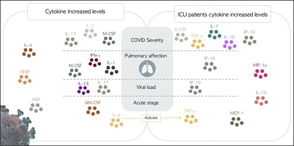 Illustrated diagram of increased cytokine levels of COVID-19 patients